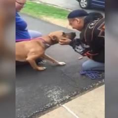 Adorable : deux ans après s'être fait voler son chien, cet homme le retrouve