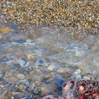 Le cadavre d'une sirène retrouvé sur une plage ? La vidéo buzz qui traumatise les internautes