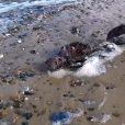 Le cadavre d'une sirène retrouvé sur la plage deGreat Yarmouth? Les photos et vidéos buzz