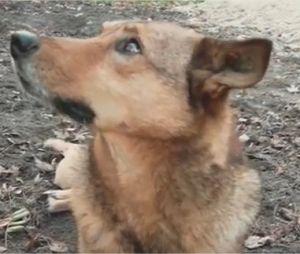Dogs of Chernobyl : le documentaire de Léa Camilleri