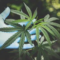 Cannabis : la légalisation de la weed en France revient dans le débat