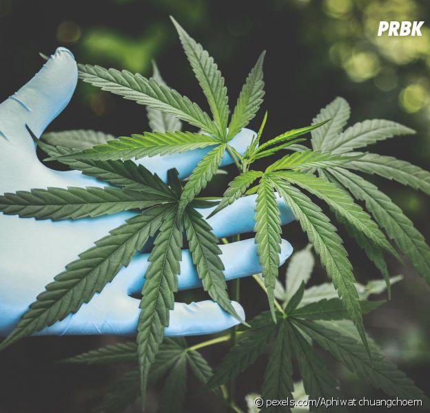 Cannabis : la légalisation de la weed en France de retour dans le débat