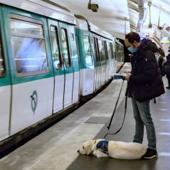 Bientôt la gratuité des transports en commun ? Une pétition lancée en Île-de-France