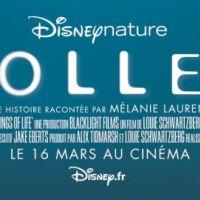 Pollen ... le nouveau film de Disney ... premier extrait du film