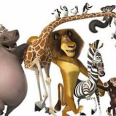 Madagascar... Les pingouins seront les stars de leur film