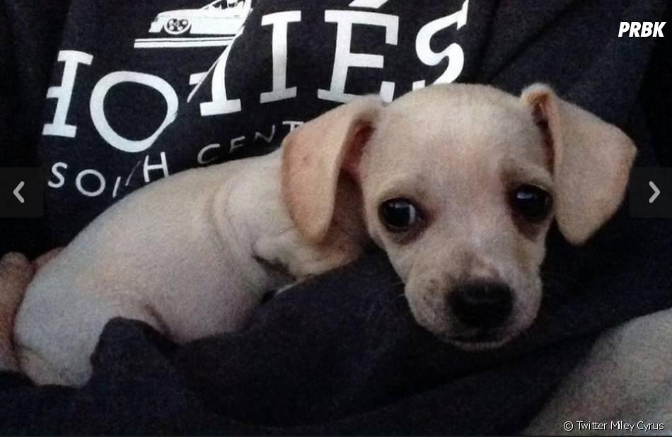 Le nouveau bébé de Miley Cyrus s'appelle Bean !
