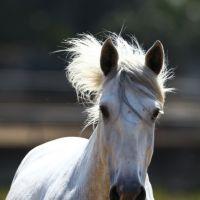 Scandale de la viande de cheval : du poison dans les assiettes