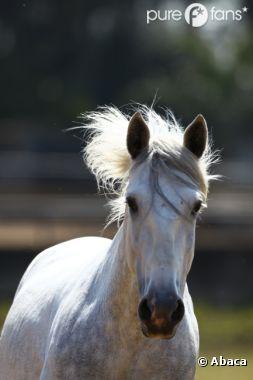 Des traces d'un produit nocif pour l'homme ont été détectées dans les carcasses de chevaux d'abattoirs du Royaume-Uni.