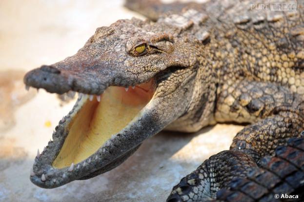 Yoann, un français de 29 ans, fait fuir un crocodile à coups de poing