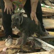 Oklahoma City : une victime de la tornade retrouve son chien en direct à la télé