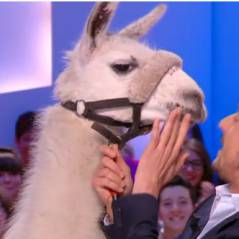 La Grand Journal : Serge le lama devient Miss Météo