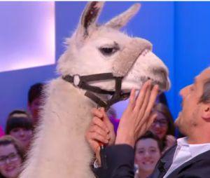 Serge le lama en Miss Météo du Grand Journal, le 13 décembre 2013 sur Canal Plus