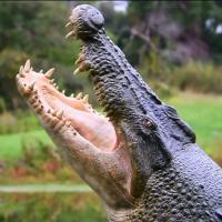[VIDÉO] Comment créer un crocodile géant en 3 minutes chrono