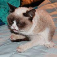 [PHOTOS] Timing parfait : 23 chats sur le point d'éternuer
