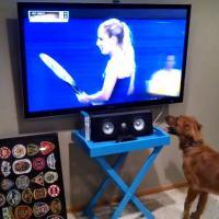 [VIDEO] Ce chien est le plus grand fan de tennis au monde