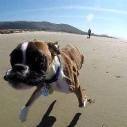 [CUTE] Un chien à deux pattes s'éclate à la plage pour la première fois