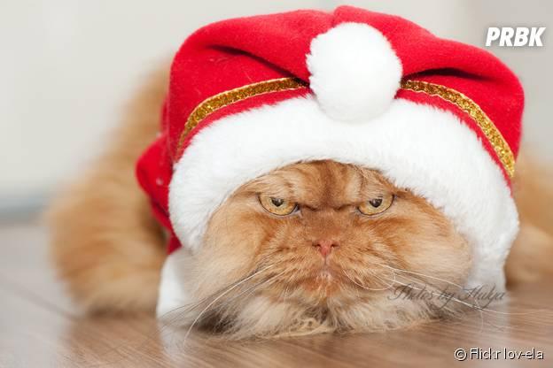 Garfi, le chat le plus en colère du monde