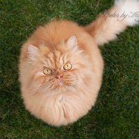 Garfi, le chat vénère nouvelle star du Web