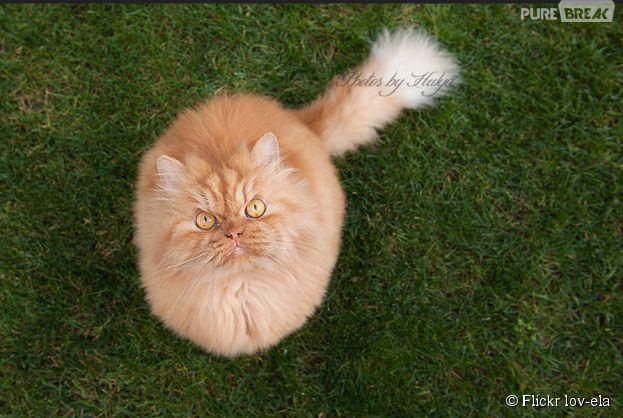 Garfi, le nouveau chat star du Web