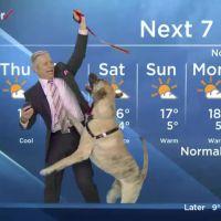 On a trouvé la météo la plus ratée du monde, merci le chien !