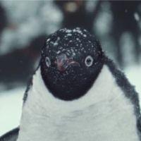 Un enfant et son pingouin inséparables : la pub la plus mignonne de Noël