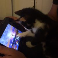 Ce chaton geek se donne à fond sur Super Smash Bros Wii U !