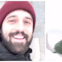 Pourquoi les chihuahuas ne courent-ils pas dans la neige ? La réponse