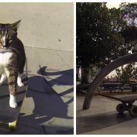 Ce chat qui fait du skate est clairement plus cool que le vôtre