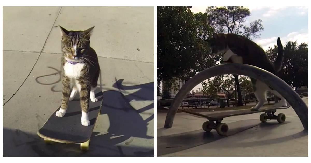 Ce chat qui fait du skate est clairement plus cool que le