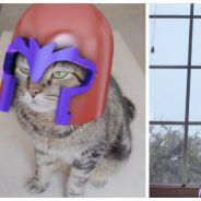 Il transforme son chat en Magnéto de X-Men dans une vidéo aux effets délirants