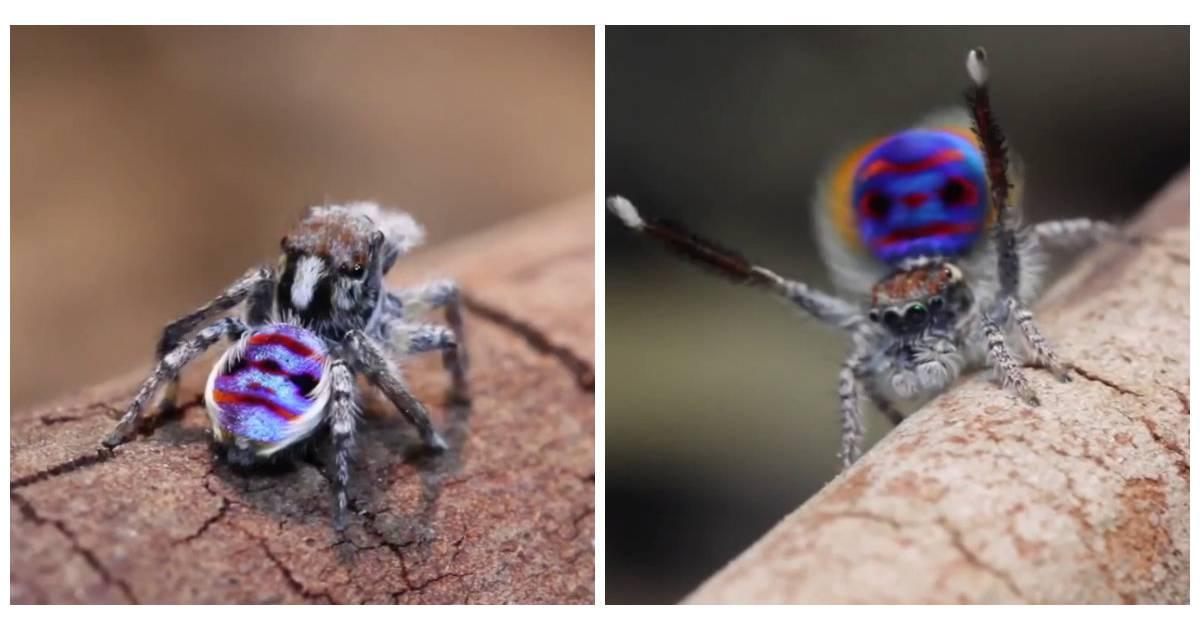 m me si vous d testez les araign es celle ci va vous hypnotiser. Black Bedroom Furniture Sets. Home Design Ideas