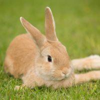 Scandale : un animateur radio tue un lapin en direct pour... parler de la cruauté animale