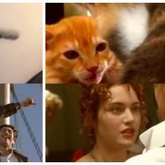 Titanic : le remake... avec des chats