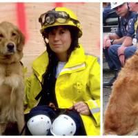 11 septembre : le dernier chien sauveteur du World Trade Center honoré aux Etats-Unis