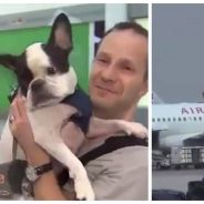 Un pilote pose son avion en urgence pour sauver la vie d'un chien en danger