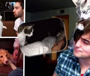 Tu sais que ton animal te déteste quand...