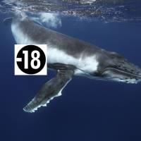 Regardez des vidéos sur PornHub... pour sauver des baleines !