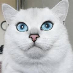 Coby, le chat aux plus beaux yeux du monde, va vous faire craquer