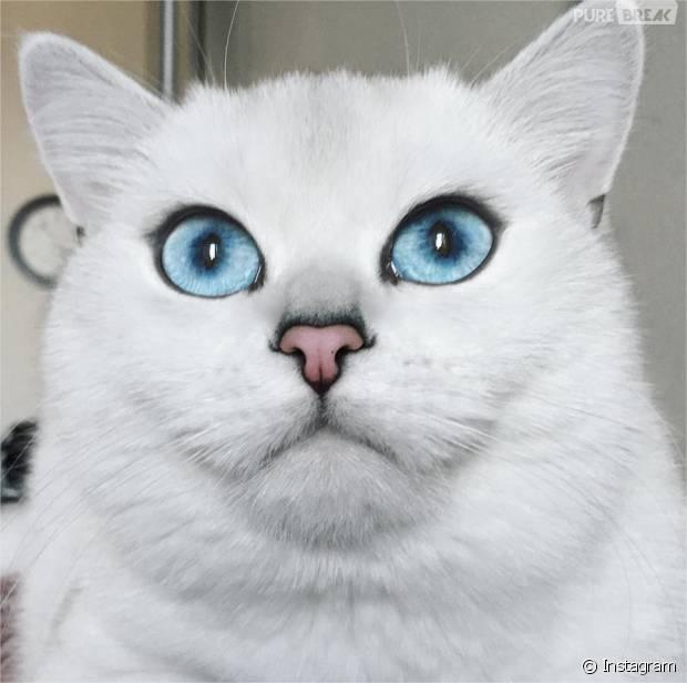 Coby, le chat aux plus beaux yeux du monde et star d'Instagram