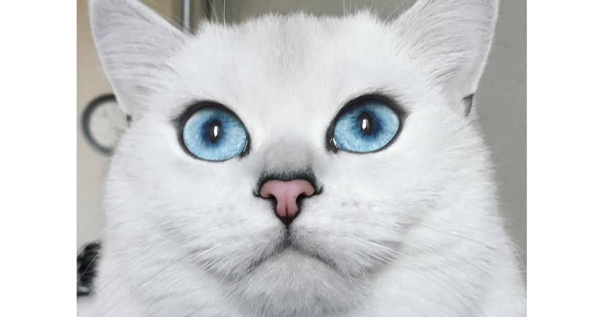 Coby le chat aux plus beaux yeux du monde va vous faire - Quel est le nom le plus porte au monde ...