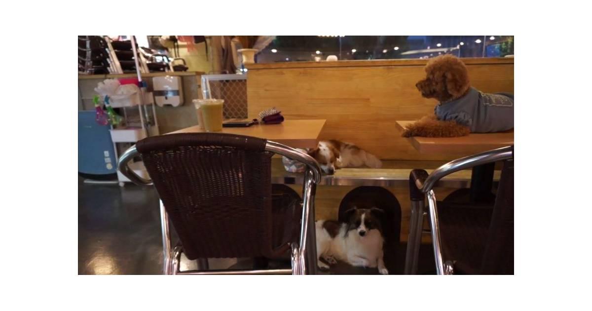voici le premier bar chiens o vous pouvez repartir avec l 39 un d 39 eux. Black Bedroom Furniture Sets. Home Design Ideas