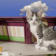Kriss : ses chatons passent le bac (ou presque) et c'est délirant