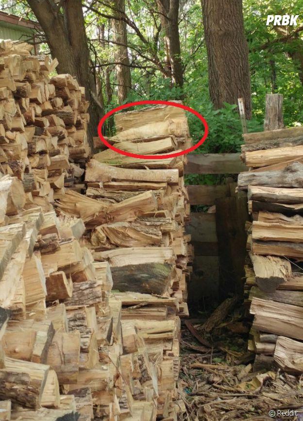 Saurez-vous trouver le chat qui dort sur cette photo ?