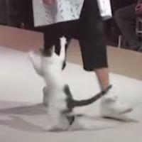 Quand un chat s'incruste à un défilé de mode, chasse les mannequins et défile 😺