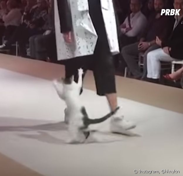 Quand un chat s'incruste à un défilé de mode, ça donne une vidéo hilarante !