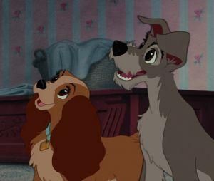La Belle et le Clochard en live-action : un acteur raconte les coulisses du tournage avec de vrais chiens.