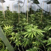 Dépénalisation du cannabis ... Les Français majoritairement contre (SONDAGE)