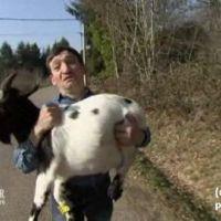 L'Amour est dans le pré: Jean-Michel et sa chèvre font le show (VIDEO)