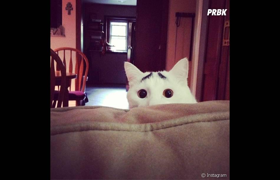 Les bars à chats intriguent Sam, le félin aux sourcils