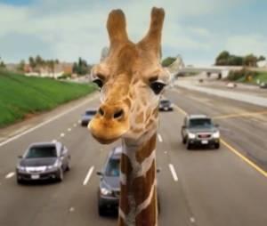 Oubliez le singe, une girafe débarque dans Very Bad Trip 3